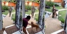 Cão reencontra o seu dono 8 meses depois… LINDO!