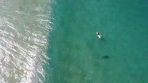 Ce surfeur échappe à un requin grâce à un... drone !