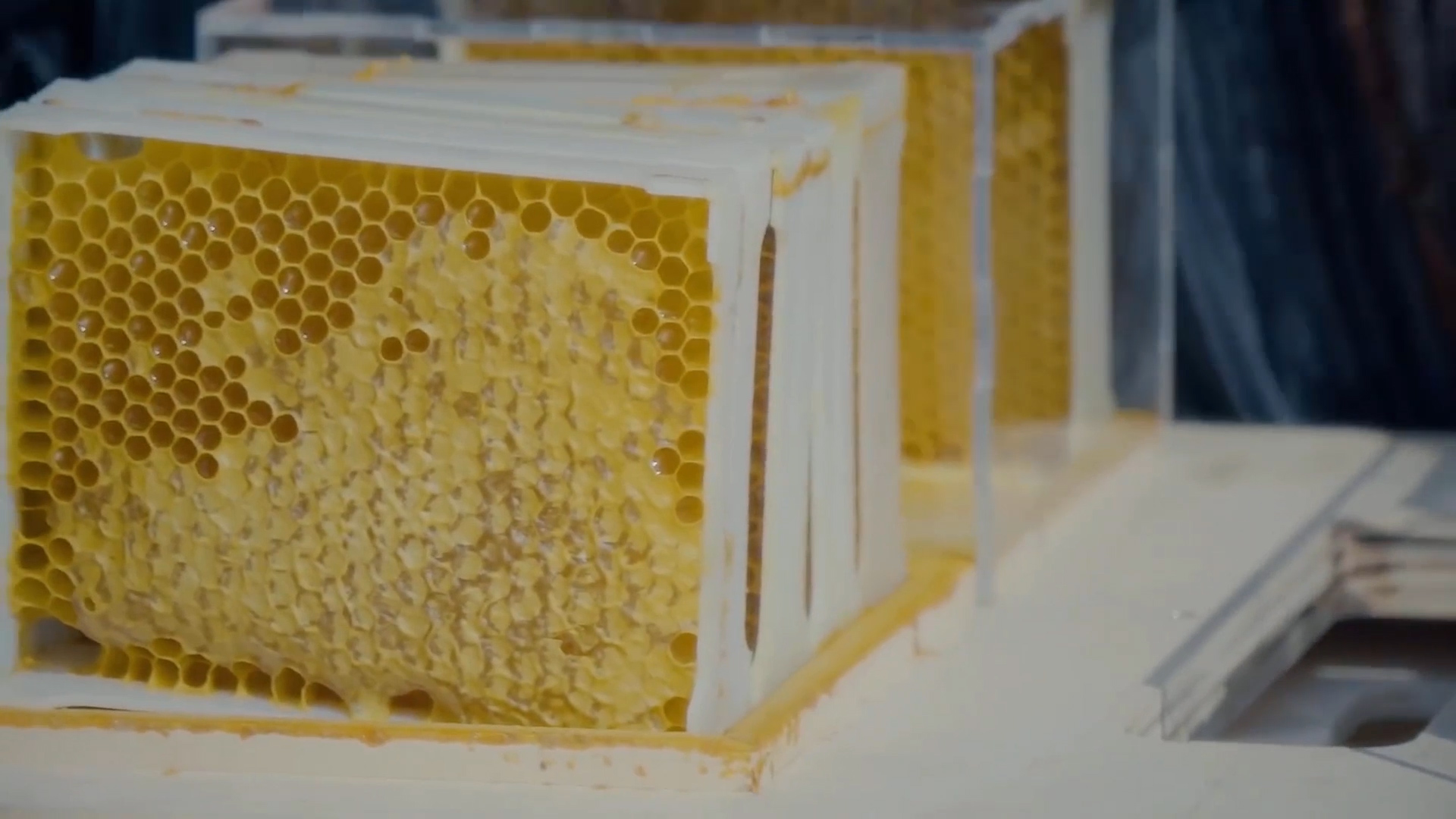 Startup Creates Modern Compact Beehive To Make Beekeeping More Accessible