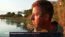 Sécheresse : dans l'Indre, des poissons sont pêchés pour être sauvés du manque d'eau