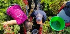 Sécheresse et travaux du lac de Kruth-Wildenstein  : pêche de sauvegarde dans la vallée de la Thur