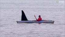 Un orque énorme rend visite à un kayakiste pour un petit calin...