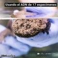 """Descubren una nueva especie de salamandra gigante, a la que llaman """"el anfibio más grande del mundo"""""""