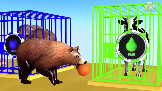 Wrong Fruits Colors Drop on Road for Animals and Cages Cartoon for Children