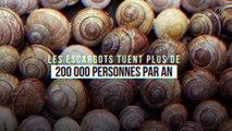 Les escargots tuent plus de 200 000 personnes par an