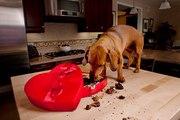 Le chocolat mauvais pour la santé du chien : mythe ou réalité ?