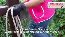 Top 5 Animal Rescues of 2019 - Faith in Humanity Restored