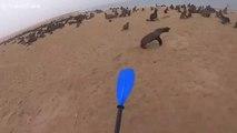 Ce kayakiste aide une otarie à se liberer d'un filet de peche