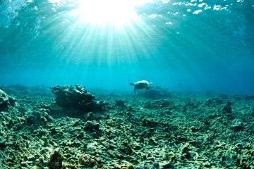 Australiens Great Barrier Reef ist in Gefahr