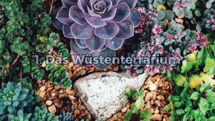 Welche Pflanzen für mein Terrarium?