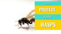 Wasps - How to protect against wasps
