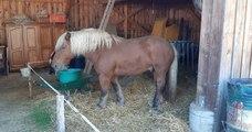 En Alsace, le cheval d'un viticulteur poursuivi par des voisins, excédés par l'odeur de crottin et d'urine