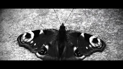 9cigK & Abycc - Schmetterling