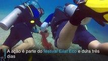 -Mergulhadores limpam corais