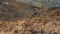 Los estragos de los incendios en los cerros de Cali