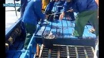 Amazing Fastest Big Tuna Fishing Skill - Extreme Catch & Processing Fish on The Sea