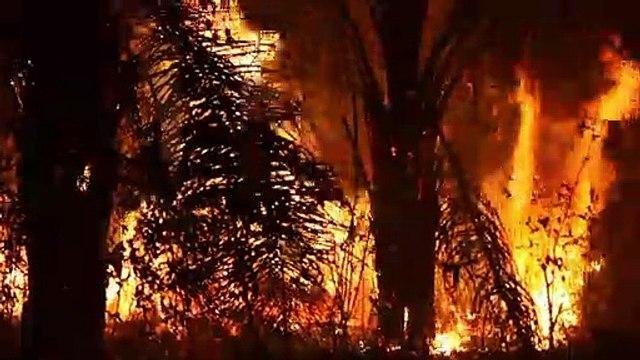 الحرائق تواصل التهام الأمازون في ظلّ القمة الأممية حول المناخ