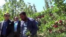Ahlat'ta elma yetiştiriciliği yaygınlaşıyor