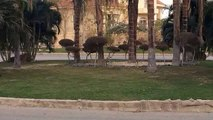 Luxurious Villa in 6th of October City  Royal Hills   2000 SQM
