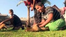 اعادة فتح حديقة حيوانات فقيرة في رفح بعد أشهر على إغلاقها