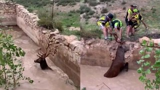 Spanish cyclists rescue trapped deer from flooded ruins of a building