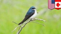 North America has lost 2.9 billion birds since 1970: Study