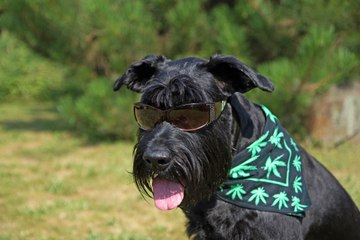 This Week in Weed: Cannabis Breathalyzers and Canada's Dog Daze