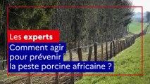Les experts alim'agri : Comment agir pour prévenir la peste porcine africaine ?