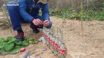 Man fills Coca-Cola bottles with 50,000 matches and sets them alight