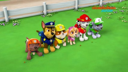 Paw Patrol : la Pat'Patrouille | Atterrissage Aveugle | NICKELODEON JUNIOR