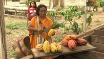 Watch: Peru's coca farmers encouraged to switch to cacao crop