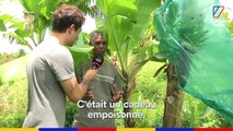 Hugo Clément et Clément Brelet sont allés en Martinique où plus de 90% de la population est contaminée au chlordécone