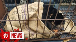Sun shines again Bear rescued after being locked u