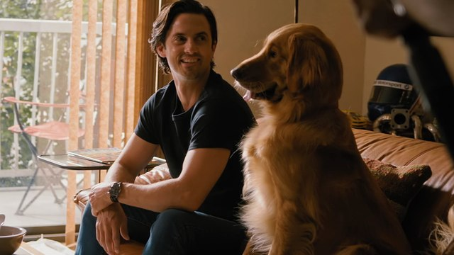 Exclusive: Watch Milo Ventimiglia Play With an Incredibly Cute Dog in The Art of Racing in the Rain