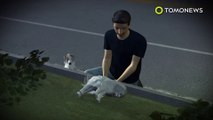 Loyal dog guards dying friend on busy street in China
