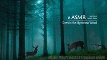 Deers in the Mysterious Wood #ASMR #Rain