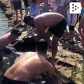 People rescue a pregnant shark from a rock pool