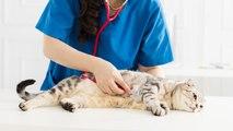 Señales de alarma en el gato