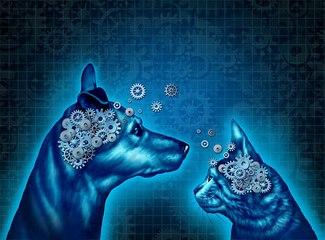 Races : Comment l'homme modifie le cerveau du chien
