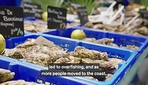 How oysters went from cheap snack to luxury dish and why they're so expensive now