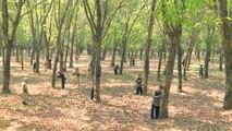 Tiếng sét trong mưa tập 33 - trực tiếp trọn bộ - tap 34 - Phim Việt Nam THVL1 - Phim tieng set trong mua tap 33
