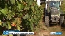 Climat : quand les vignes prennent de la hauteur