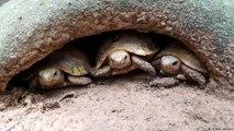 كمبوديا: إنقاذ حياة السلاحف