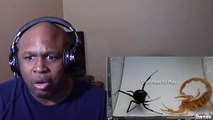 FIGHT TO THE DEATH!! - Scorpion Goes At It With A Black Widow Spider! REACTION (BlastphamousHD)