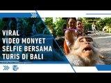 Viral, Video Cara Monyet Selfie Diambil di Monkey Forest Ubud Bali