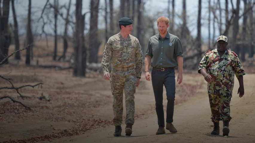 Prince Harry shares own tree photo as he guest-edits National Geographic's Instagram