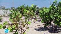 غزة.. تحسين مياه الري لزيادة المحاصيل الزراعية
