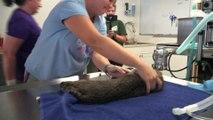 A Special Bobcat Update - Part 1