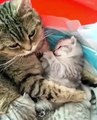 Quand une chatte passe un magnifique moment complice avec son petit, voici ce que ça donne !
