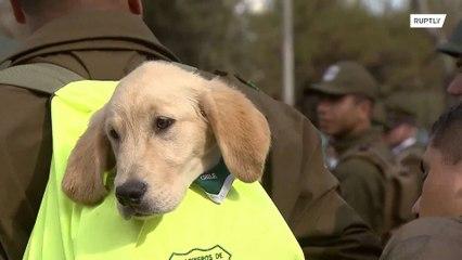Cachorros acaparan todas las miradas en un desfile militar en Chile